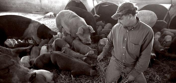 Renewed Call For Antibiotic Regulations In Farm Animals