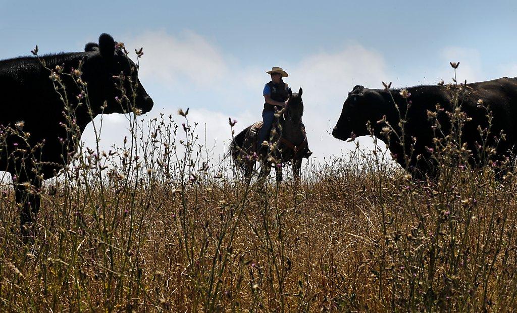 Antibiotic Use Still Widespread In Livestock